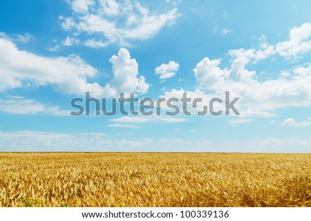 field of wheat under cloudy sky