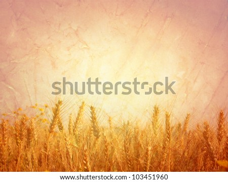 Field of wheat; vintage photo style