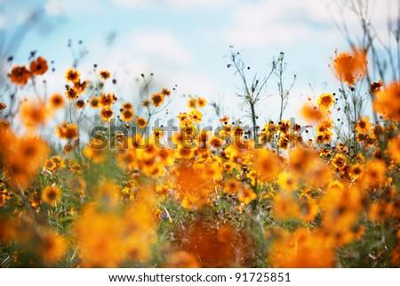 Field of wildflowers blossom