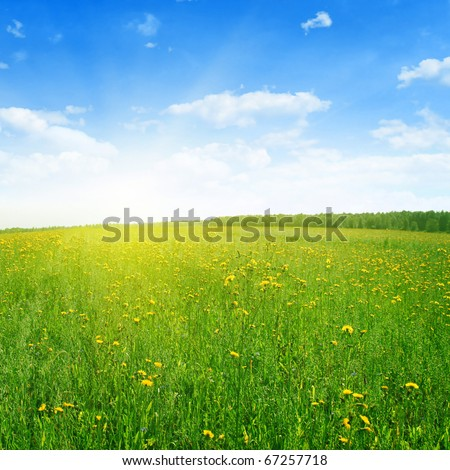 Field of wildflowers on sunny day. - stock photo