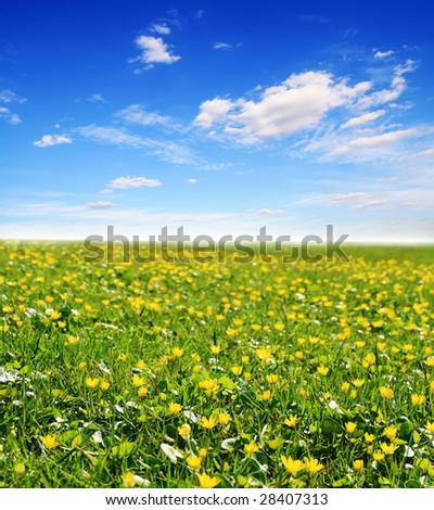 field of yellow flowers and blue cloudy sky