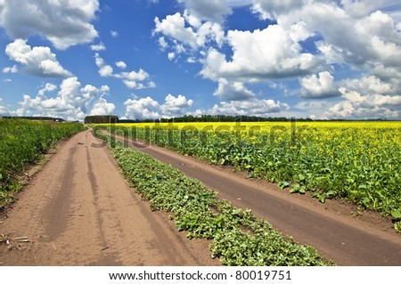 Field of yellow flowers and suburban dirt road that goes the distance. Summer landscape.