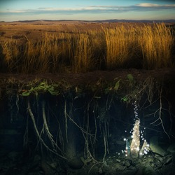 Field of yellow grass and magic underworld. Seeds of Mother Earth concept