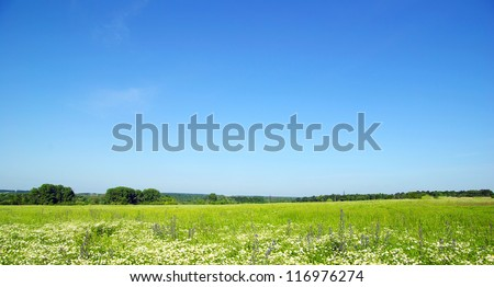 field on a background of the blue sky #116976274