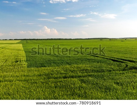 field on which grows next to green rye and green wheat before ripening, summer landscape in sunny weather - Shutterstock ID 780918691