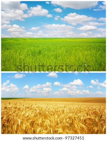 Field. Spring and Summer season.