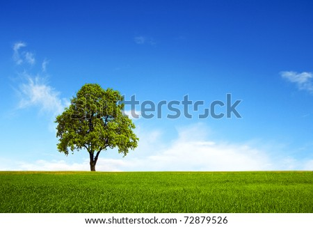 Field,tree and blue sky #72879526