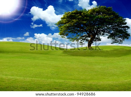 field, tree, sun and blue sky