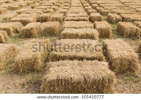 Field with bales of hay or straw countryside at harvest time