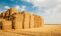 field with bales of hay or straw. danish countryside at harvest time. straw stack wood for animal feed. A pyramid of hay with the blue cloudy sky in the background