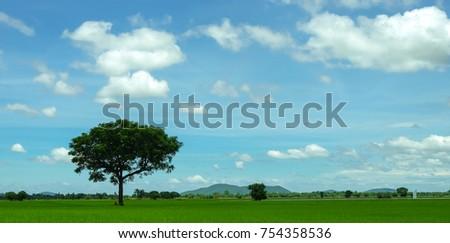 field with beautiful sky...