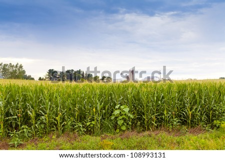Field with Blurry Farm Buildings in the background