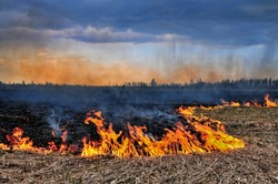 field with burning dry grass, fire