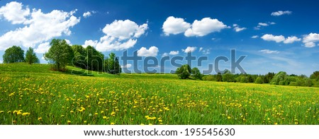 Field with dandelions and blue sky - Shutterstock ID 195545630