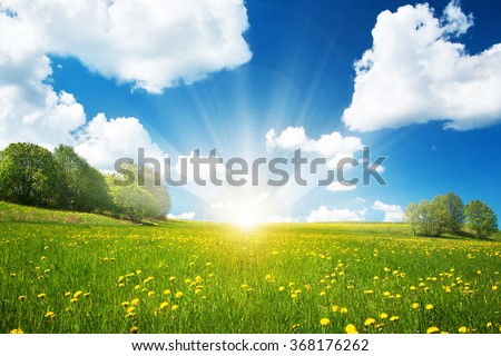 Field with dandelions and blue sky - Shutterstock ID 368176262