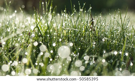 Field with dew