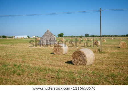 Field with drystone trullo hut and wheat stalk bales. Murgia countryside. Apulia, Italy