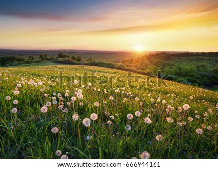 Stock Photo Field with flower in the mountain valley. Beautiful natural landscape in the summer time