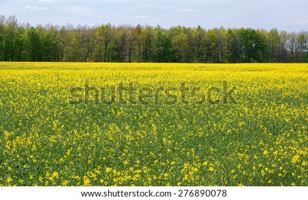 Stock Photo Field with flowers