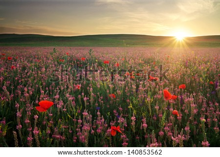 Field with grass, violet flowers and red poppies against the sunset sky - stock photo