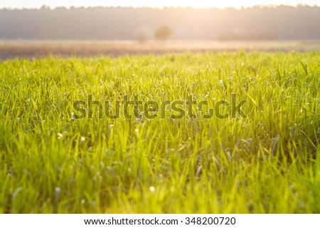 field with green grass #348200720