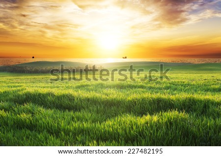 field with green grass against...