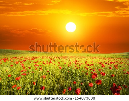 Shutterstock field with green grass and red poppies against the sunset sky
