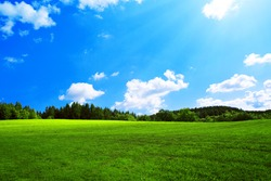 Field with green grass and sun.