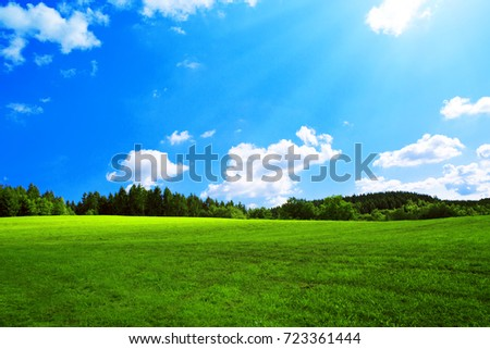 Field with green grass and sun. #723361444
