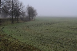 Field with green grass in late autumn, tree and fog
