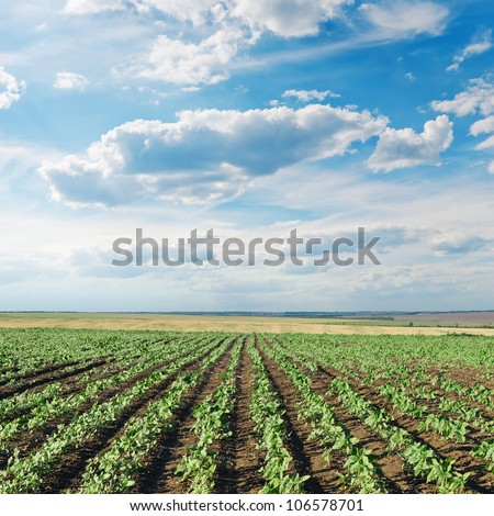 field with green sunflowers under cloudy sky