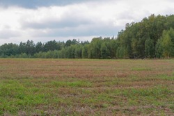 Field with mown dry grass cloudy sky forest