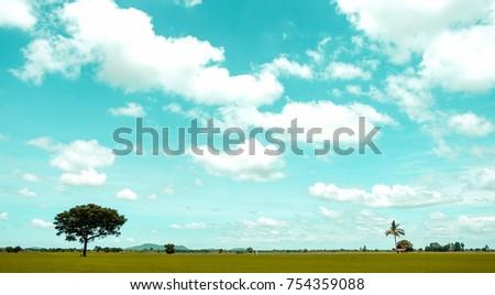field with plastel sky tree is...