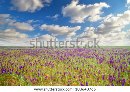 field with purple flowers on a background of mountains. natural composition