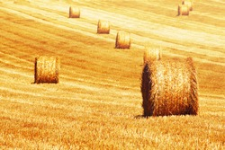 Field with straw bales, Mallorca, Spain