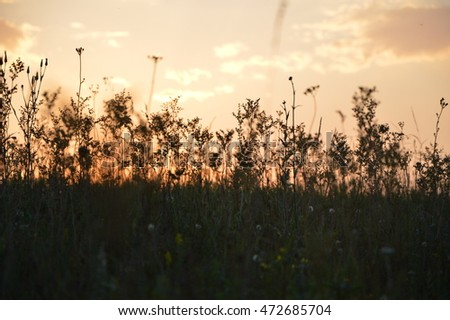 Field with sunset. Grass / background. #472685704