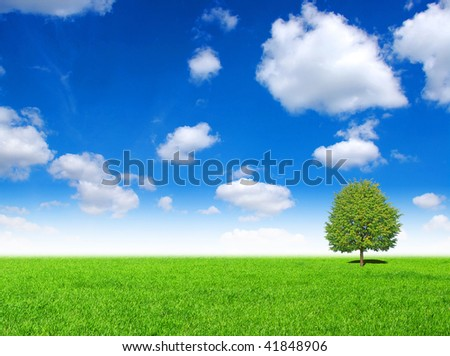 field with tree #41848906