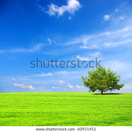 field with tree #60951451