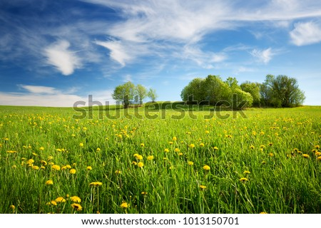 Field with yellow dandelions and blue sky #1013150701