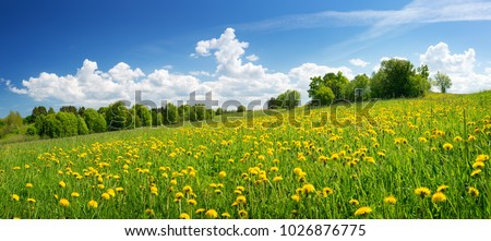 Field with yellow dandelions and blue sky #1026876775