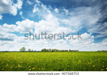 Field with yellow dandelions and blue sky #407368753