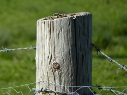 Field Wooden Knotted Fence Post