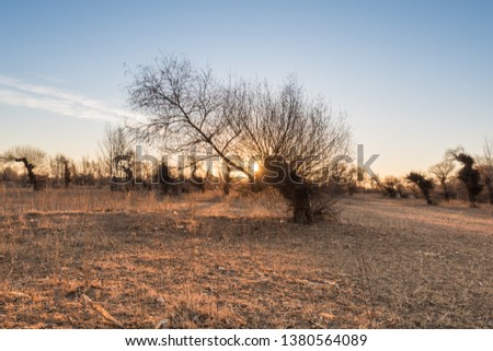 Fields and strange willow forests under the sunrise in Inner Mongolia, China #1380564089