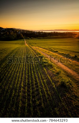 Fields in sunset light. Norway #784643293