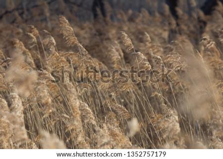 fields in windy weather