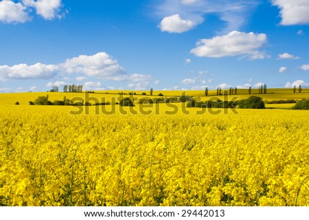 Fields of bright yellow rapeseed flowers with hills and trees