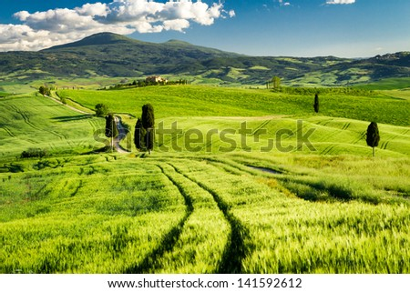 Fields of wheat in the valley in Tuscany