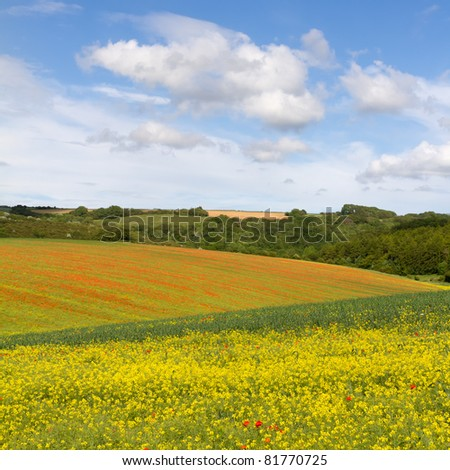 Fields with blooming rapeseed and poppies, Cotswolds, UK