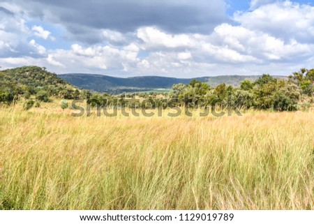 Fields with tall grass on the hills in the Trichardspoort River Valley, Gouwsberg Mountain Range in the vicinity of Bronkhorstspruit east of Pretoria South Africa