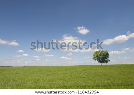 Fields with tree against a blue sky